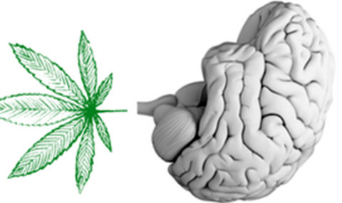 cannabis-cerebro