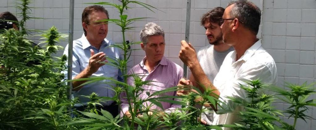 """A superação do preconceito pode salvar vidas"""", defende Paulo Teixeira -  Cannabis & Saúde"""