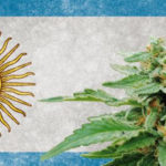 Argentina legaliza auto cultivo de maconha e venda de óleos em farmácias