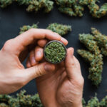 tipos de cannabis