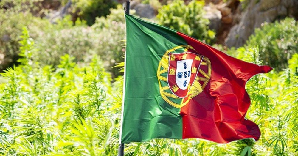 www.cannabisesaude.com.br