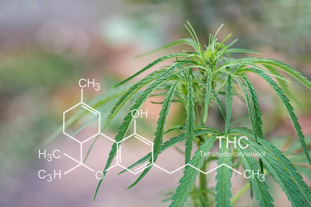 tetrahidrocanabinol quais medicamentos usam na sua composicao