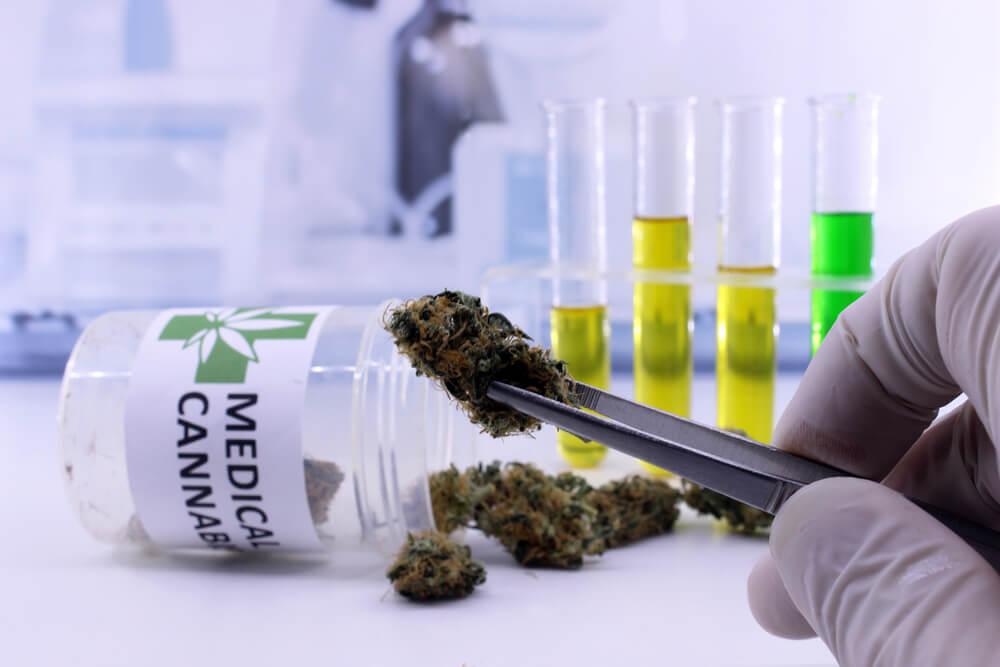 cannabis medicinal panorama geral
