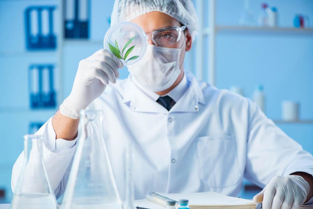 cannabis medicinal como ter acesso no brasil