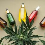 Cannabis medicinal não causa déficit cognitivo, aponta estudo