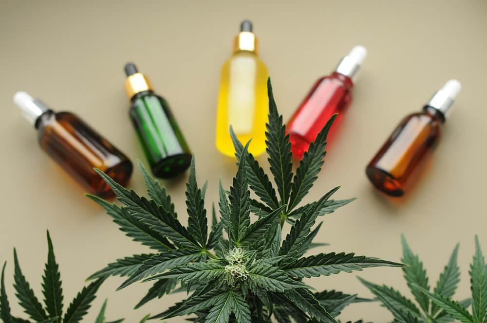 Cannabis Medicinal o que é