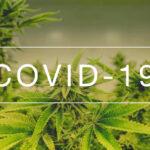 Canabidiol pode reduzir danos da Covid-19 no pulmão, revela pesquisa dos EUA