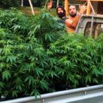 """""""Nos deu mais ânimo"""", diz advogado da Apepi após cair liminar do cultivo de Cannabis"""
