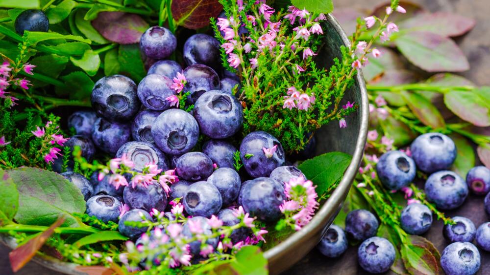 flavonoides beneficios