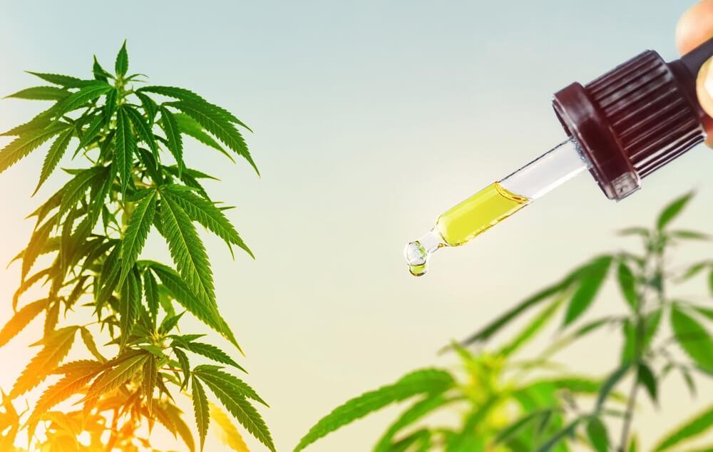 óleo de cannabis extração full spectrum como conseguir