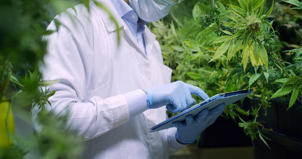 CBD laboratório desenvolvimento de medicamentos a base de canabidiol como funciona