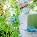CBD resultados comprovacao cientifica para tratamentos
