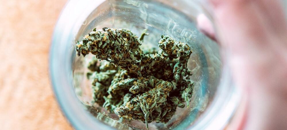 cepa de cannabis strain estirpe o que são tipos efeitos