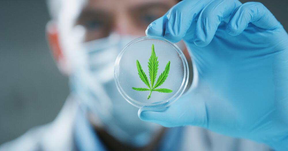 Lista de Médicos que Prescrevem Canabidiol como ser um medico que prescreve cannabis medicinal