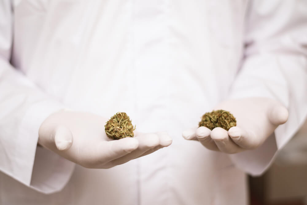 síndrome de lennox gastaut como encontrar um medico para o tratamento com cannabis
