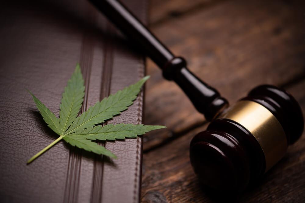 cannabis regulamentaçãocannabis regulamentação guia completo sobre autorizações anvisa