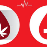 Pacientes e usuários de Cannabis podem doar sangue?