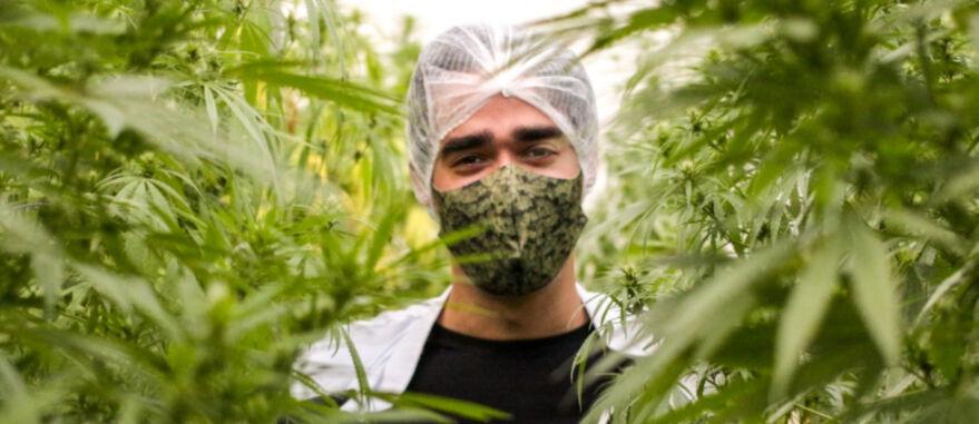 Cannabis-tratamento-medicos-linha-de-frente-covid