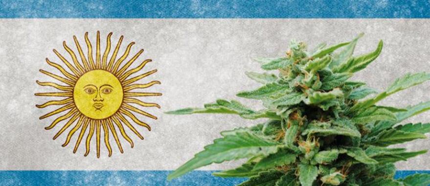argentina-canabis