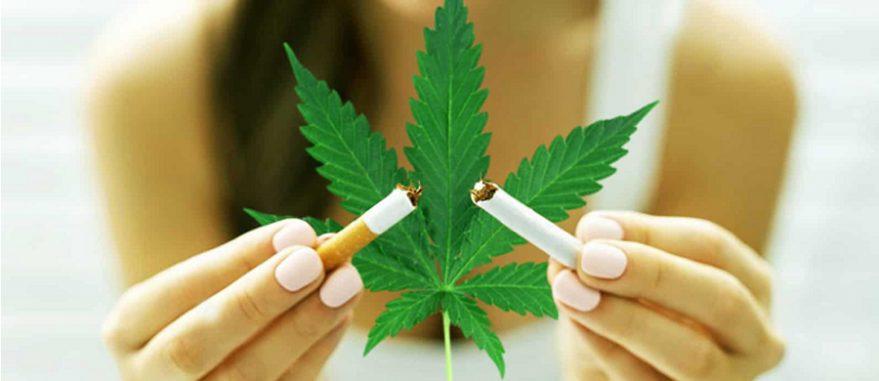 canabidiol tabagismo