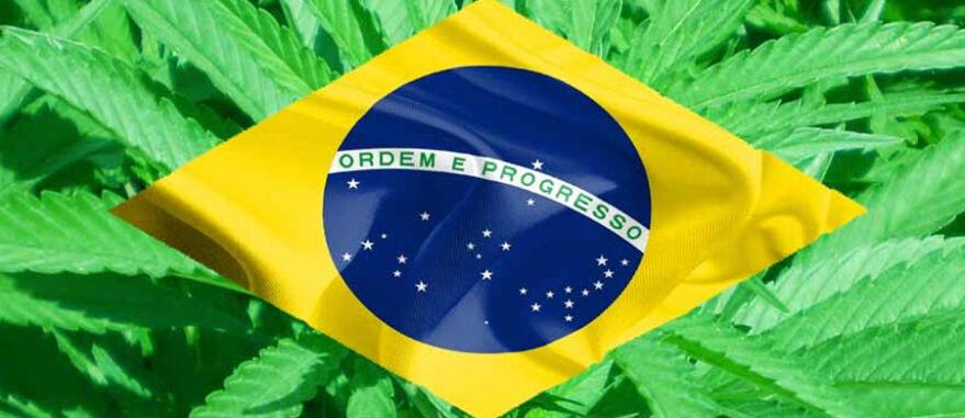 Até 43 milhões de pacientes podem se beneficiar da cannabis no brasil