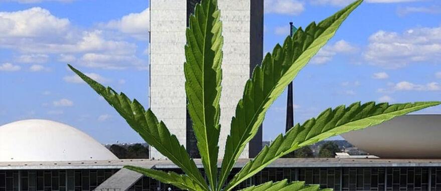 Câmara vota projeto que legaliza plantio de Cannabis para fins medicinais e industriais no Brasil