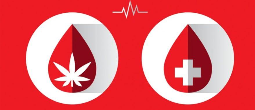 cannabis doacao de sangue