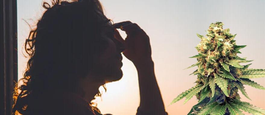 cannabis-enxaqueca