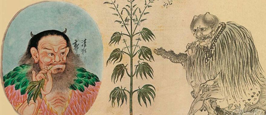 Vienna Dioscurides, 512. A China tem uma longa história de uso de maconha.