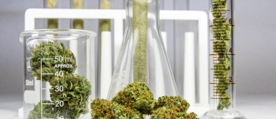 o que é cannabis