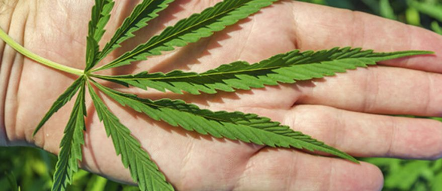 parkinson-tratamento-cannabis1