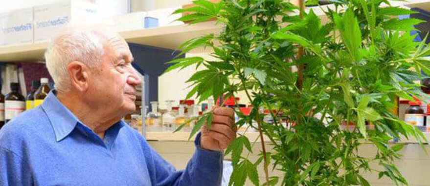 Raphael Mechoulam é o pai da Cannabis