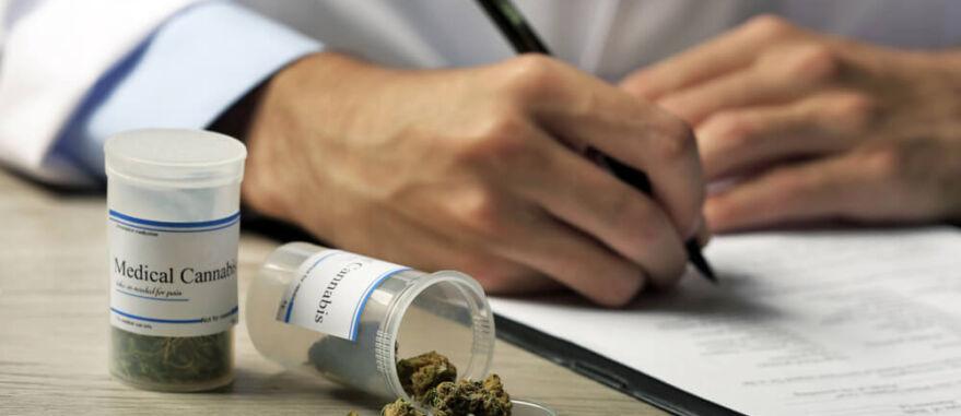 sistema endocanabinoide o que e-como funciona cannabis medicinal