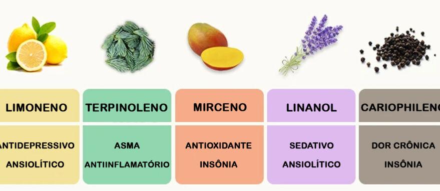 Reprodução | Alguns dos terpenos mais presentes na Cannabis